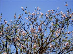 Весна в Индии